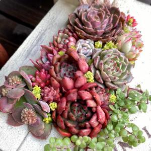 鉢も多肉も可愛い寄せ植え&ポチった加湿器の使い心地(*Ü*)