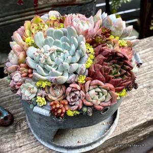 コンロ缶のリメイク鉢に贅沢寄せ植え&多肉用の土入れ(*´ω`*)