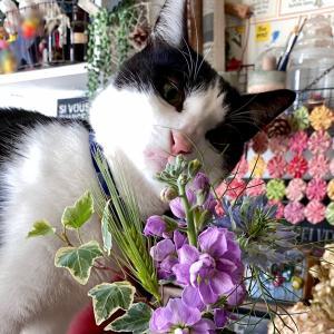 花のサブスクに興味を示す猫&6年植えっぱなしのサボテン |ωФ≡)