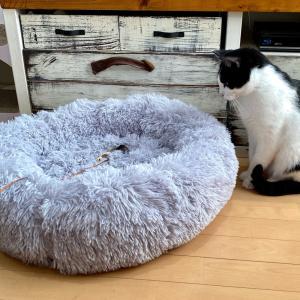 花だらけの多肉花壇&猫ベッドがモコモコに復活 |ωФ≡)ωФ≡)♬