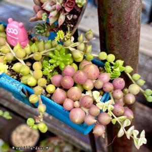目をひく赤い植物&やっと買えたコストコ人気商品(*´꒳`*)♫