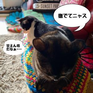 朝から揉める猫&夏越しした多肉花壇の最強メンバー |ωФ≡)ωФ≡)♫