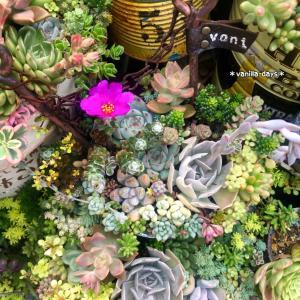 お世話楽チンな夏の花&おこげの嫌がらせ |ωФ≡)フフフ