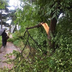 13号台風「リンリン」は恐ろしかった...(台風の跡と被害)