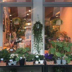 ベルギーのお花屋さん