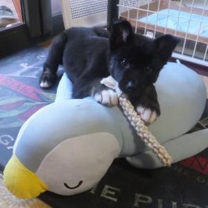 満身創痍のペンギンさん
