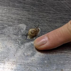 小さくてカワイイ世界