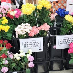 激安一輪花&ドライフラワー販売♪11/24minahan in 大宮北ハウジングステージ