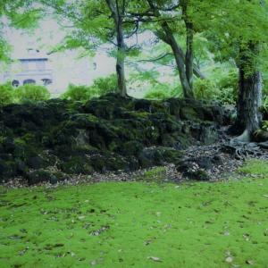 日本庭園の一服