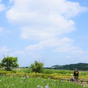 日常の風景 ~小岩菖蒲園~