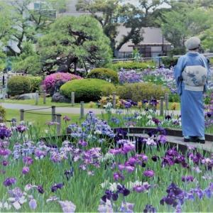 初夏の下町さんぽ ~堀切菖蒲園~