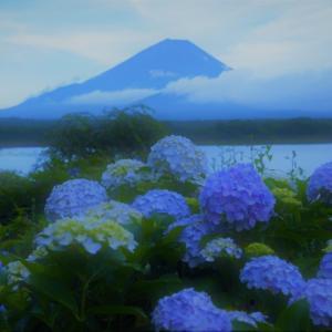 富士に紫陽花 ~精進湖~