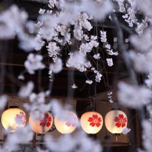 春の京都2019