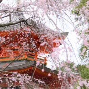 京の桜で平成にさよなら