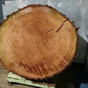 薪活 杉の大木で焚き付け作り