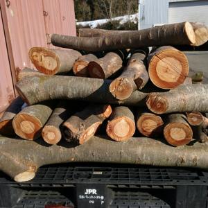 薪活  今シーズンの開幕は伐採済みの頂いた欅でスタート