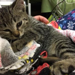 ジェイソンの駐車場で轢かれていた子猫の飼い主を探しています