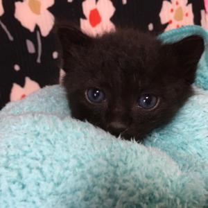 成田市公津の杜生まれの仔猫4匹の里親さん募集中