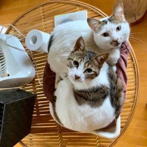 保護した仔猫たちの様子(第3回目)