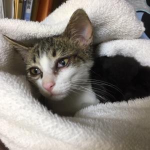 成田市に「飼い主のいない猫」の保護団体が誕生します
