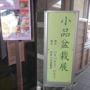 松寿小品盆栽展