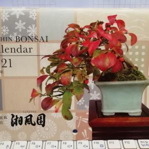 湘風園さんのカレンダー