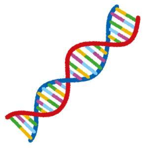 DNAの二重螺旋