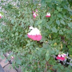 花の名前が知りたい
