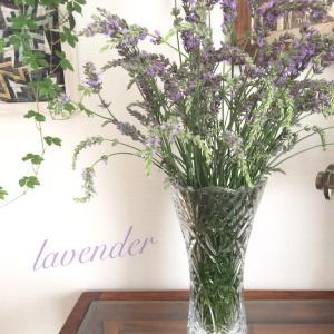 ラベンダーの花咲く
