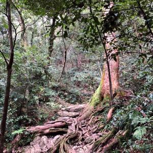 自然の癒し 金華山