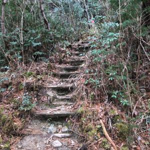 自然の恵み  山歩き&いちごパフェ