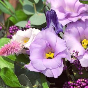 花の力で自律神経の乱れを整える
