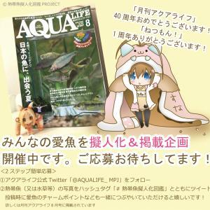 月刊アクアライフ「ねつもん!」愛魚募集中
