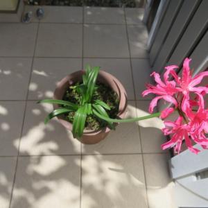 我が家で初めての花