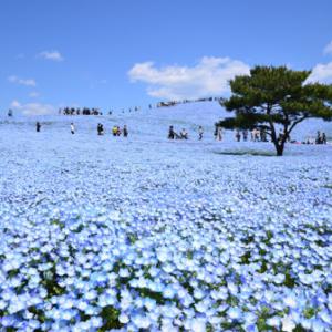 青い花見っけ (^^♪