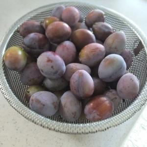プルーン収穫しましたヽ(^o^)丿
