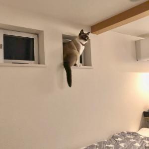 猫のゆうちゃん
