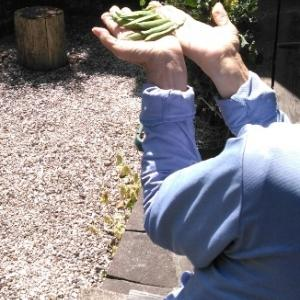庭でエンドウ収穫(けあらーず土岐事業所)