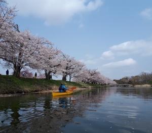 福岡堰お花見カヌー