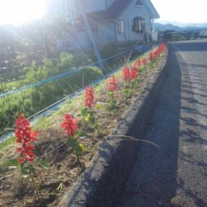 花とスズメ瓜