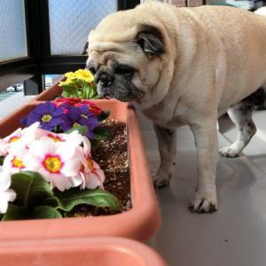 お花を可愛がらない理由は・・・