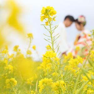 春をサキドリ♪ 菜の花ロケーションフォト