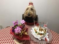 ひな10歳おめでとう!!