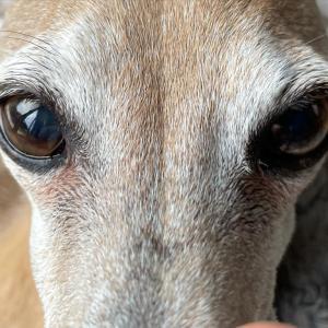 ラスティの右眼異変