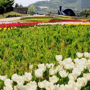 淡路島国営明石海峡公園チューリップが綺麗だったよ