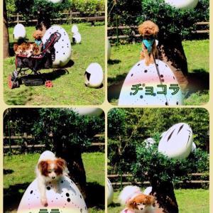 淡路島公園の紫陽花卵の卵のオブジェのうえにワンコ達乗せて写真撮ったよ