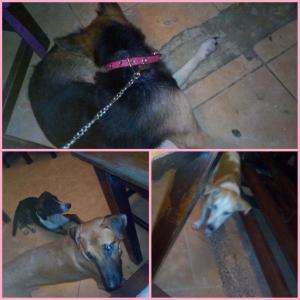 フィリピン ボラカイ 台風でレバンティで犬とご飯♬