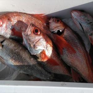 アカムツ釣り2日連チャンで行ってきました。