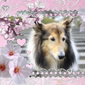 [コピー]桜満開の岩脇公園へ行ったよ!
