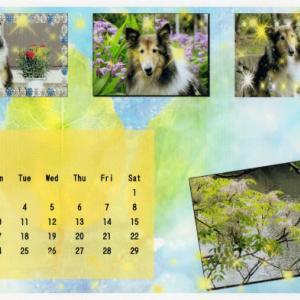 【複製】庭のバイカウツギの花とアンだよ!